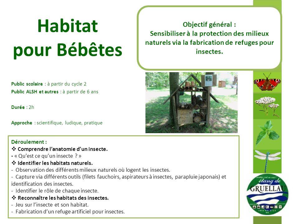 Habitat pour Bébêtes Public scolaire : à partir du cycle 2 Public ALSH et autres : à partir de 6 ans Durée : 2h Approche : scientifique, ludique, pratique Déroulement : Comprendre lanatomie dun insecte.