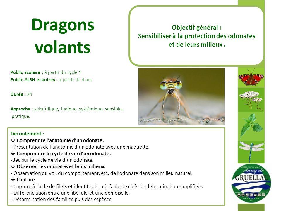 Dragons volants Public scolaire : à partir du cycle 1 Public ALSH et autres : à partir de 4 ans Durée : 2h Approche : scientifique, ludique, systémique, sensible, pratique.