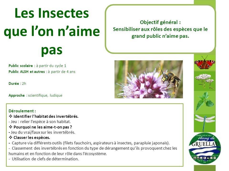 Les Insectes que lon naime pas Public scolaire : à partir du cycle 1 Public ALSH et autres : à partir de 4 ans Durée : 2h Approche : scientifique, lud