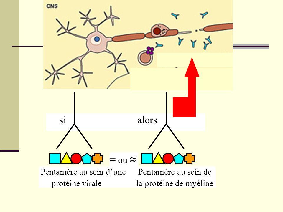 si alors Pentamère au sein dune Pentamère au sein de protéine virale la protéine de myéline = ou