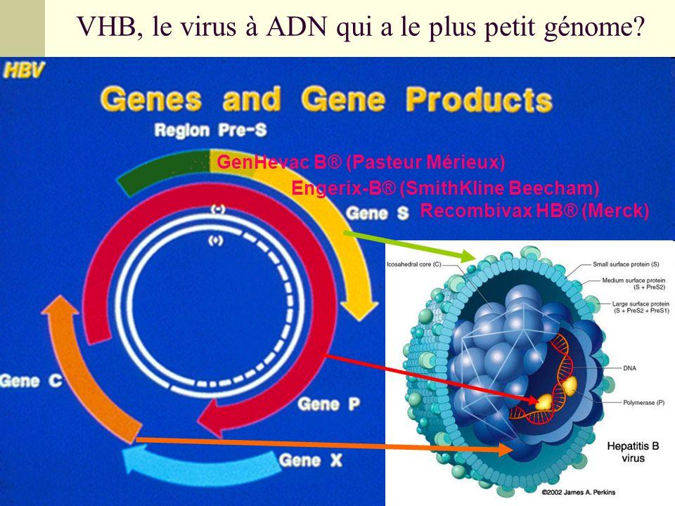 VHB, le virus à ADN qui a le plus petit génome? Engerix-B® (SmithKline Beecham) Recombivax HB® (Merck) GenHevac B® (Pasteur Mérieux)