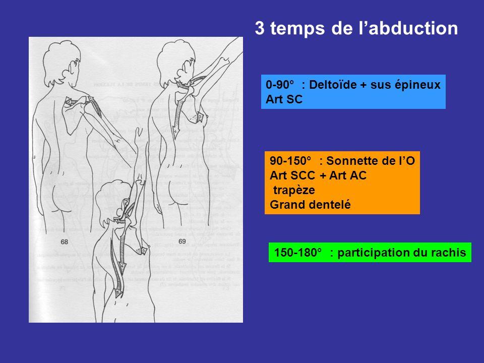 3 temps de labduction 0-90° : Deltoïde + sus épineux Art SC 90-150° : Sonnette de lO Art SCC + Art AC trapèze Grand dentelé 150-180° : participation d