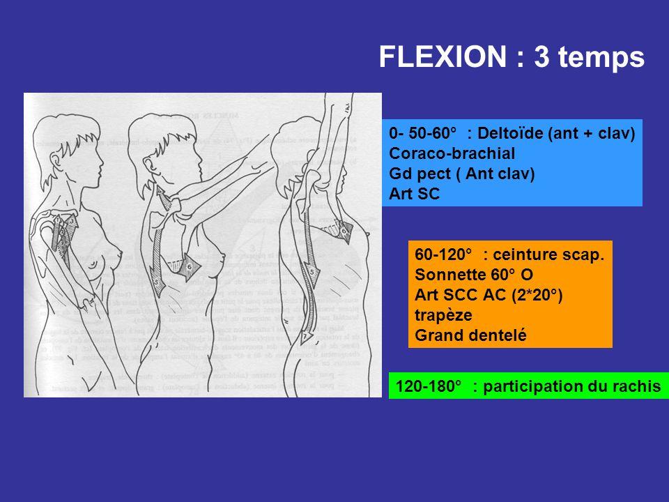 FLEXION : 3 temps 0- 50-60° : Deltoïde (ant + clav) Coraco-brachial Gd pect ( Ant clav) Art SC 60-120° : ceinture scap. Sonnette 60° O Art SCC AC (2*2
