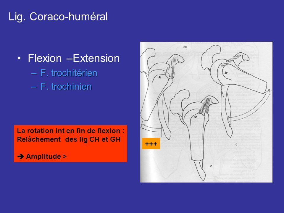 Flexion –Extension –F. trochitérien –F. trochinien Lig. Coraco-huméral +++ La rotation int en fin de flexion : Relâchement des lig CH et GH Amplitude
