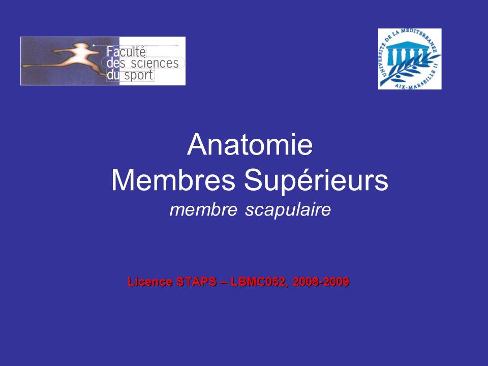Anatomie Membres Supérieurs membre scapulaire Licence STAPS – LBMC052, 2008-2009