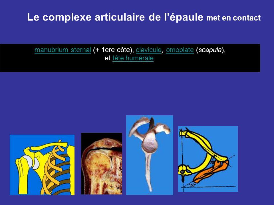 Le complexe articulaire de lépaule met en contact manubrium sternalmanubrium sternal (+ 1ere côte), clavicule, omoplate (scapula),claviculeomoplate et