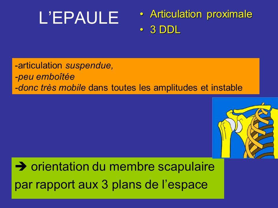 LEPAULE Articulation proximaleArticulation proximale 3 DDL3 DDL orientation du membre scapulaire par rapport aux 3 plans de lespace -articulation susp