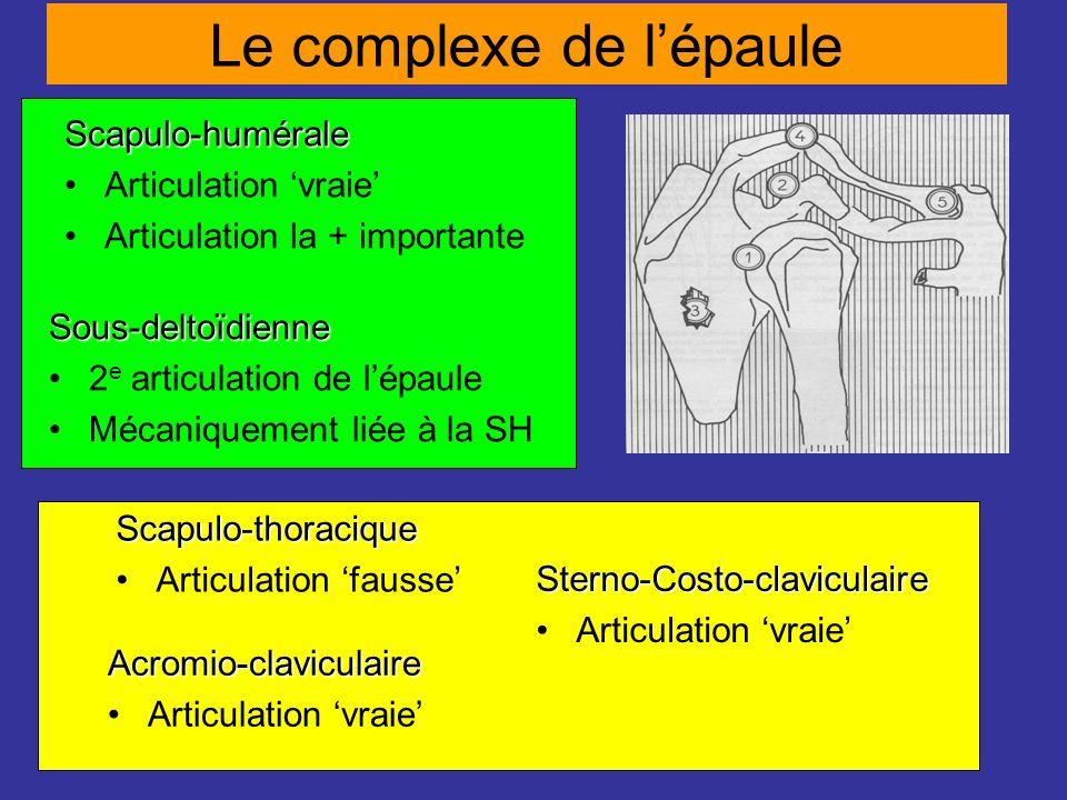 Le complexe de lépaule Scapulo-humérale Articulation vraie Articulation la + importante Sous-deltoïdienne 2 e articulation de lépaule Mécaniquement li