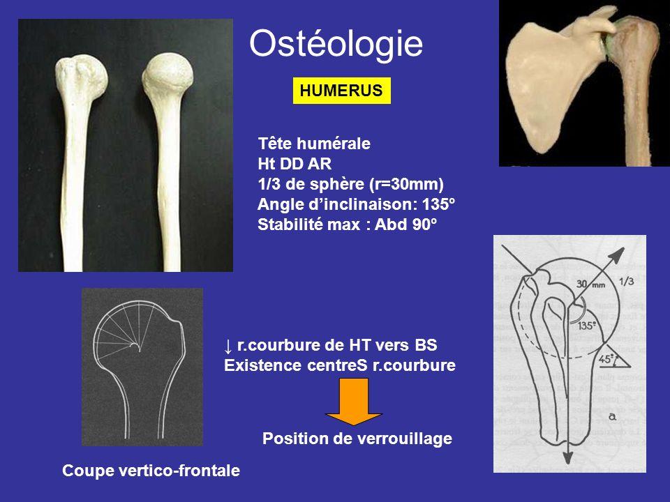 Ostéologie Tête humérale Ht DD AR 1/3 de sphère (r=30mm) Angle dinclinaison: 135° Stabilité max : Abd 90° HUMERUS Coupe vertico-frontale r.courbure de