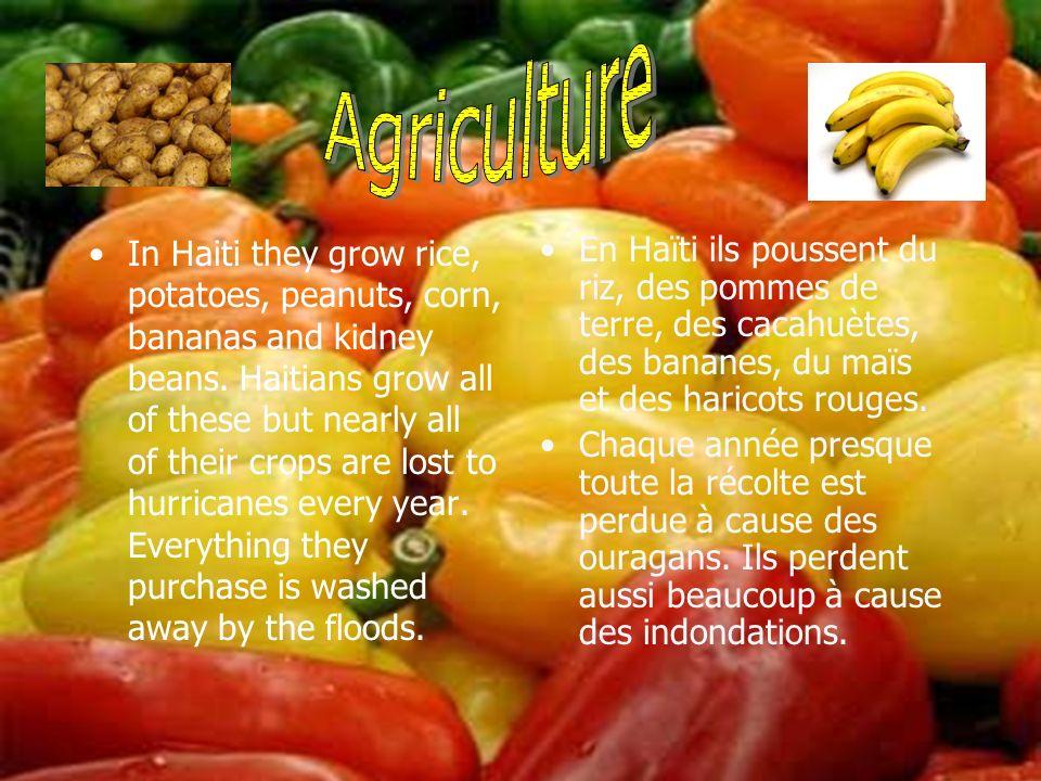 En Haïti ils poussent du riz, des pommes de terre, des cacahuètes, des bananes, du maïs et des haricots rouges. Chaque année presque toute la récolte