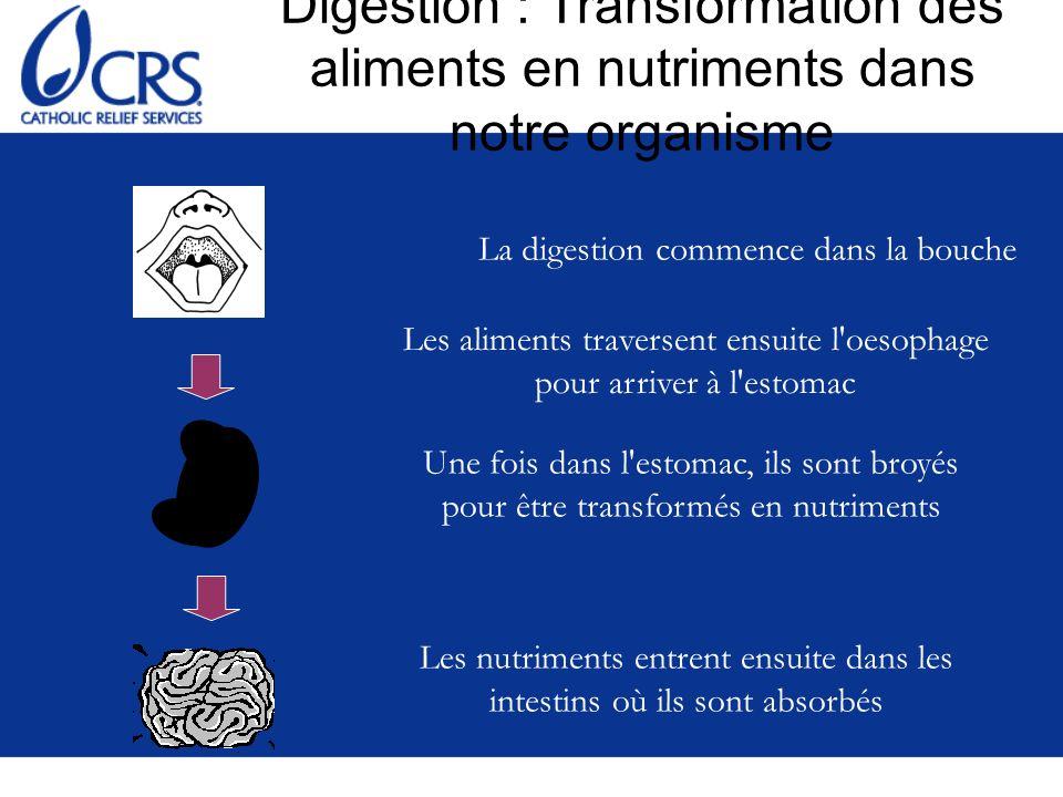 Groupe d aliments N° 5 : Aliments d origine animale Riches en protéines Vitamines et minéraux (notamment les organes des animaux) Fer et vitamines liposolubles Exemples : –Viande, poisson, volaille –Insectes –Oeufs, lait