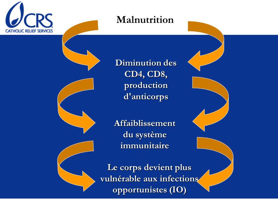 Malnutrition Diminution des CD4, CD8, production d'anticorps Affaiblissement du système immunitaire Le corps devient plus vulnérable aux infections op