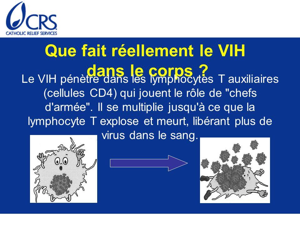 Que fait réellement le VIH dans le corps ? Le VIH pénètre dans les lymphocytes T auxiliaires (cellules CD4) qui jouent le rôle de