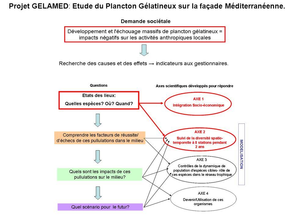Projet GELAMED: Etude du Plancton Gélatineux sur la façade Méditerranéenne.