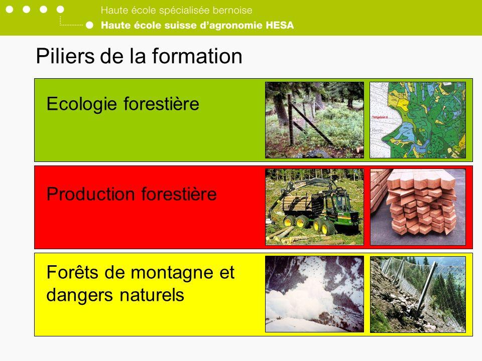 Piliers de la formation Ecologie forestière Production forestière Forêts de montagne et dangers naturels