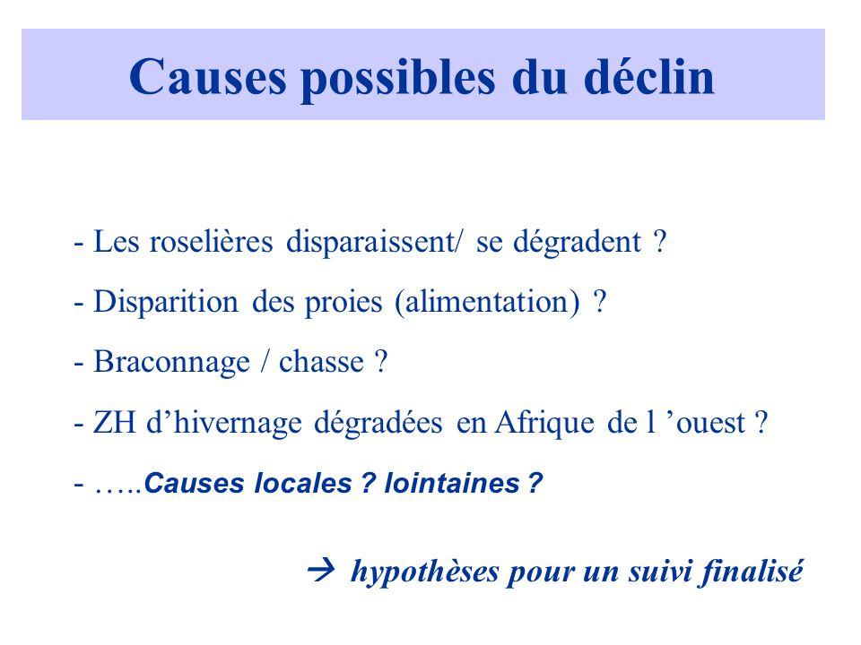 Causes possibles du déclin - Les roselières disparaissent/ se dégradent ? - Disparition des proies (alimentation) ? - Braconnage / chasse ? - ZH dhive