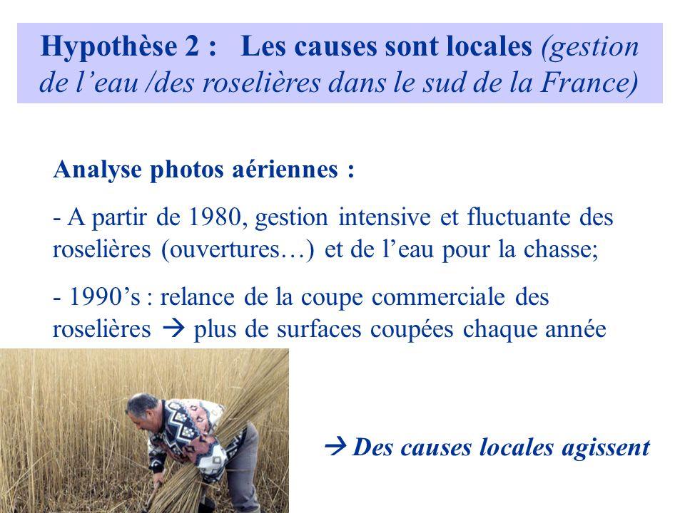 Hypothèse 2 : Les causes sont locales (gestion de leau /des roselières dans le sud de la France) Analyse photos aériennes : - A partir de 1980, gestion intensive et fluctuante des roselières (ouvertures…) et de leau pour la chasse; - 1990s : relance de la coupe commerciale des roselières plus de surfaces coupées chaque année Des causes locales agissent