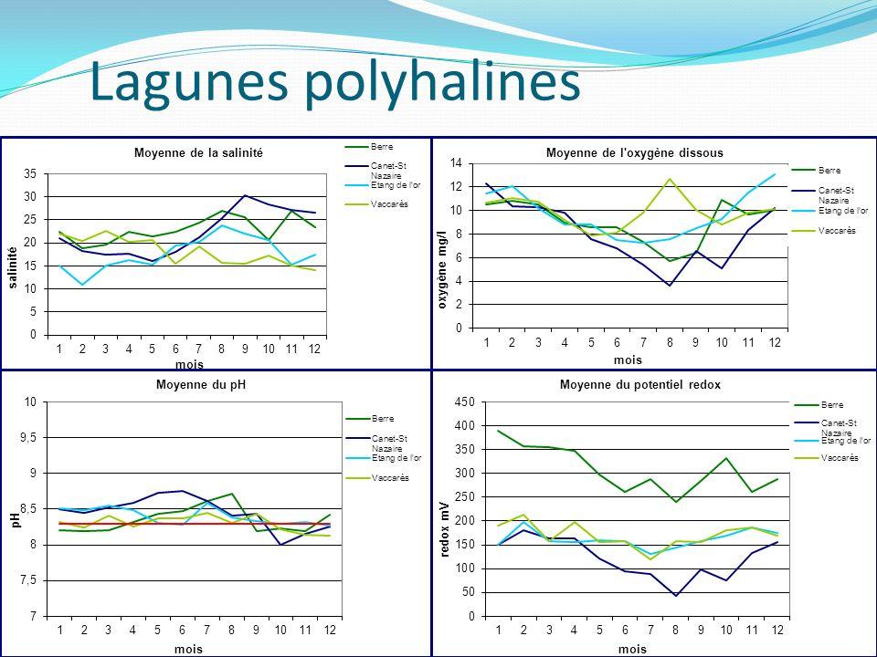 Lagunes polyhalines
