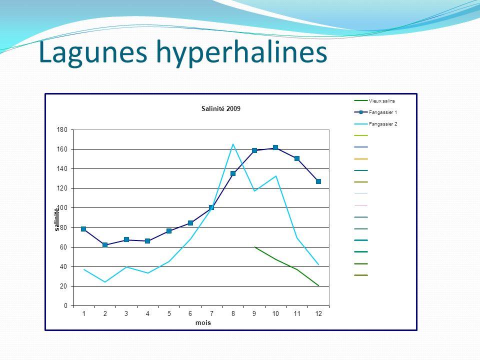 Lagunes hyperhalines