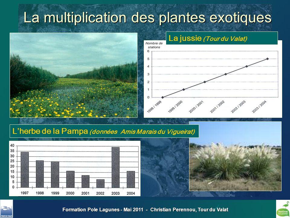 Formation Pole Lagunes - Mai 2011 - Christian Perennou, Tour du Valat La multiplication des plantes exotiques Lherbe de la Pampa (données Amis Marais