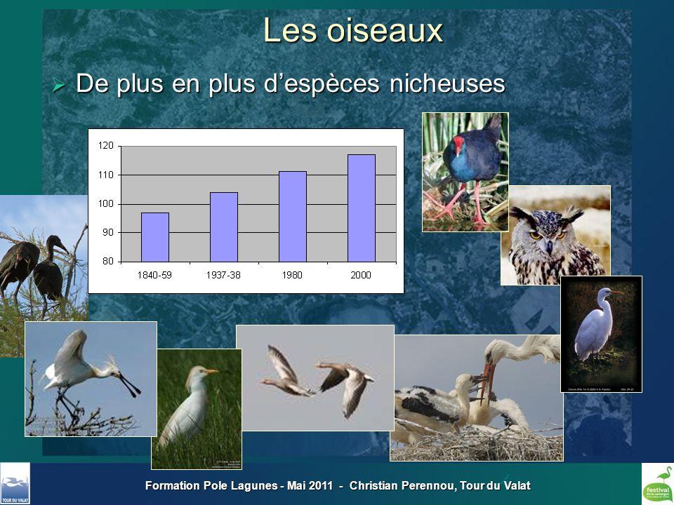 Formation Pole Lagunes - Mai 2011 - Christian Perennou, Tour du Valat Les oiseaux De plus en plus despèces nicheuses De plus en plus despèces nicheuse