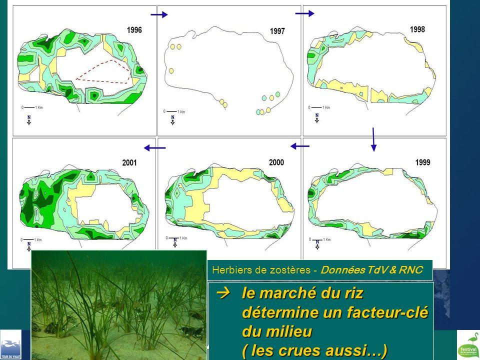 Formation Pole Lagunes - Mai 2011 - Christian Perennou, Tour du Valat le marché du riz détermine un facteur-clé du milieu ( les crues aussi…) le march