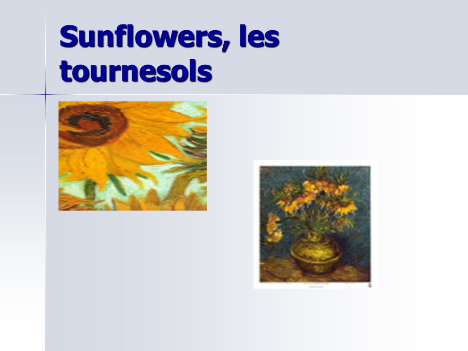 Sunflowers, les tournesols
