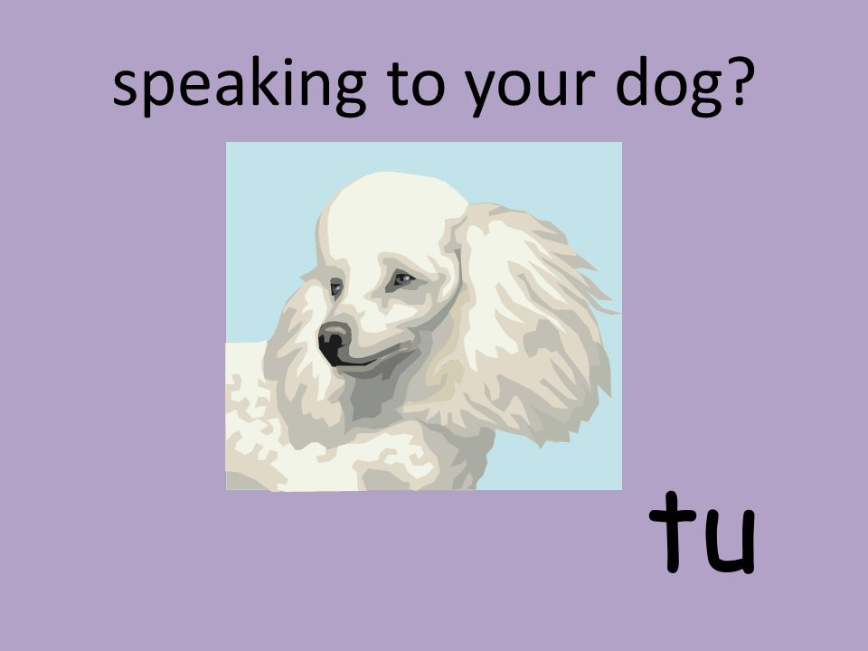 speaking to your dog? tu
