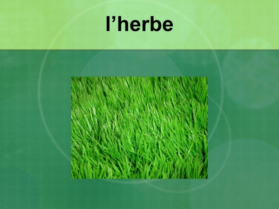 lherbe