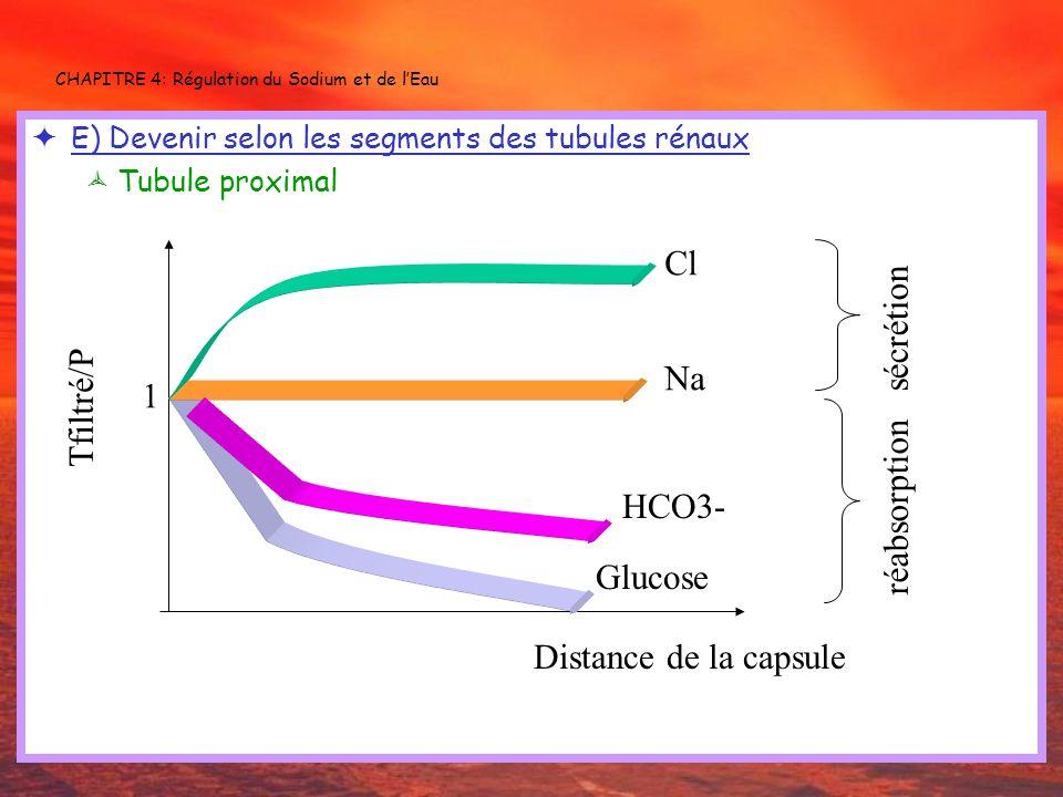 CHAPITRE 4: Régulation du Sodium et de lEau E) Devenir selon les segments des tubules rénaux Tubule proximal Glucose Cl Na Distance de la capsule Tfil