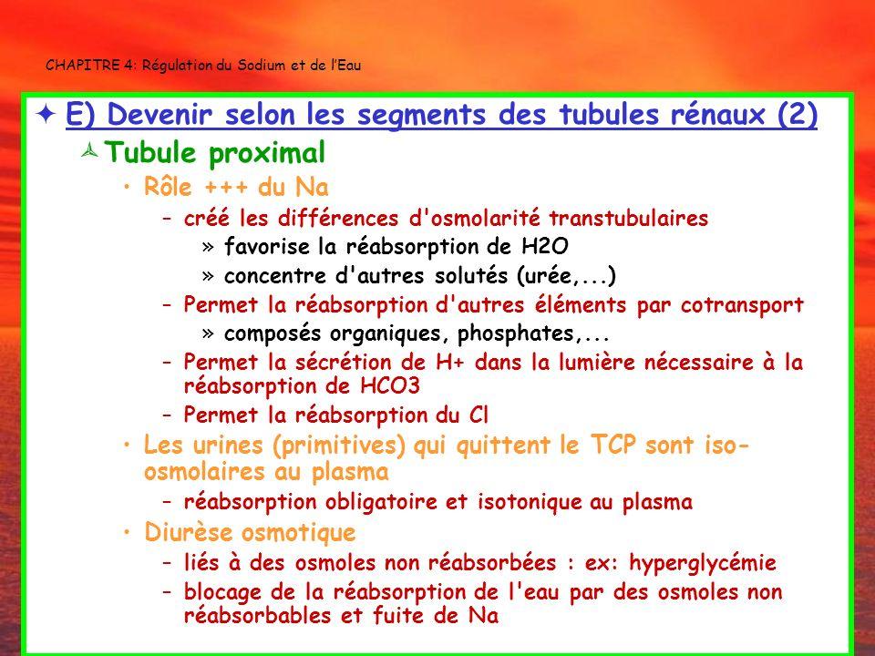 CHAPITRE 4: Régulation du Sodium et de lEau E) Devenir selon les segments des tubules rénaux (2) Tubule proximal Rôle +++ du Na –créé les différences