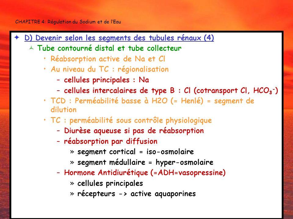 CHAPITRE 4: Régulation du Sodium et de lEau D) Devenir selon les segments des tubules rénaux (4) Tube contourné distal et tube collecteur Réabsorption