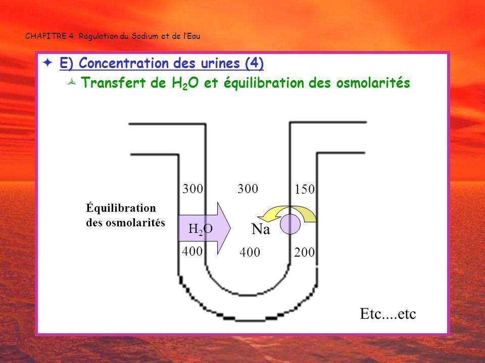 CHAPITRE 4: Régulation du Sodium et de lEau E) Concentration des urines (4) Transfert de H 2 O et équilibration des osmolarités 400 300 150 Na 200 300
