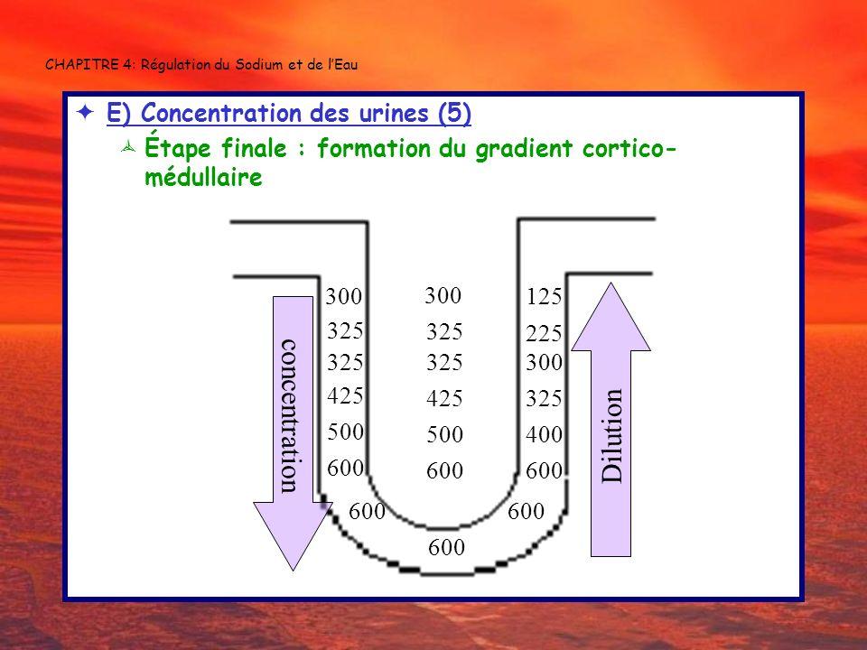 CHAPITRE 4: Régulation du Sodium et de lEau E) Concentration des urines (5) Étape finale : formation du gradient cortico- médullaire 600 300 125 600 3
