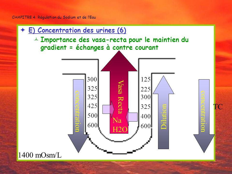CHAPITRE 4: Régulation du Sodium et de lEau E) Concentration des urines (6) Importance des vasa-recta pour le maintien du gradient = échanges à contre