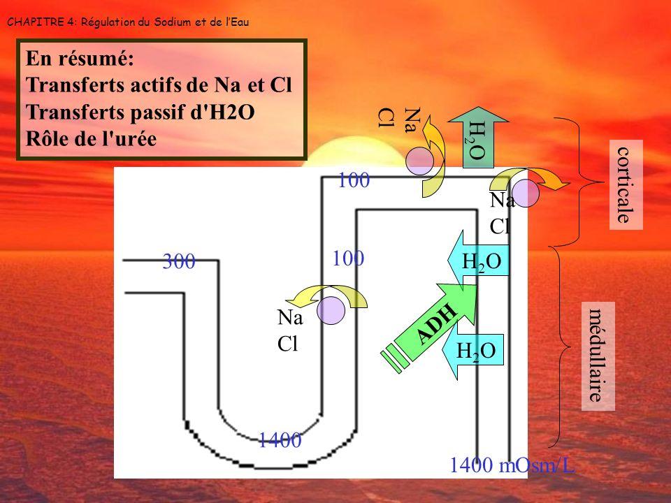 Na Cl Na Cl CHAPITRE 4: Régulation du Sodium et de lEau Na Cl H2OH2O H2OH2O H2OH2O médullaire corticale 1400 mOsm/L 100 1400 300 ADH En résumé: Transf