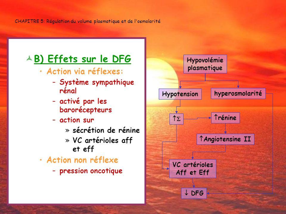CHAPITRE 5: Régulation du volume plasmatique et de l'osmolarité B) Effets sur le DFG Action via réflexes: –Système sympathique rénal –activé par les b