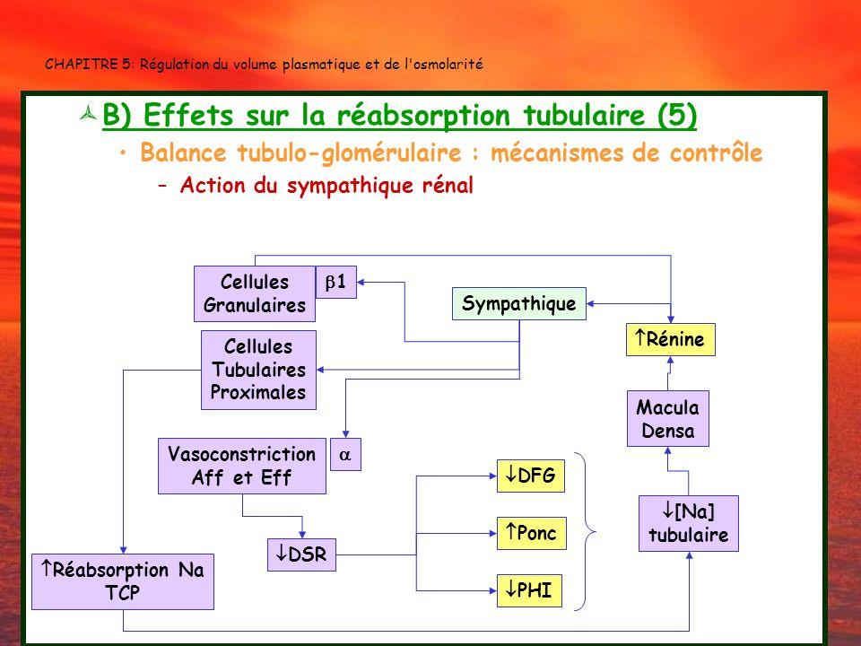 CHAPITRE 5: Régulation du volume plasmatique et de l'osmolarité B) Effets sur la réabsorption tubulaire (5) Balance tubulo-glomérulaire : mécanismes d