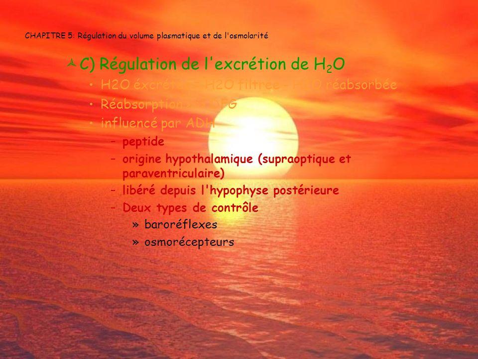 CHAPITRE 5: Régulation du volume plasmatique et de l'osmolarité C) Régulation de l'excrétion de H 2 O H2O éxcrétée = H2O filtrée - H2O réabsorbée Réab