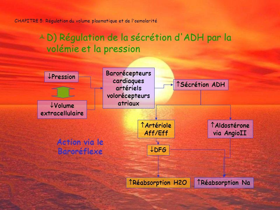 CHAPITRE 5: Régulation du volume plasmatique et de l'osmolarité D) Régulation de la sécrétion d'ADH par la volémie et la pression Barorécepteurs cardi