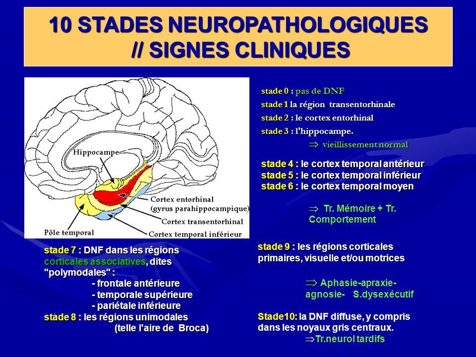 stade 0 : pas de DNF stade 1 la région transentorhinale stade 2 : le cortex entorhinal stade 3 : l'hippocampe. vieillissement normal vieillissement no