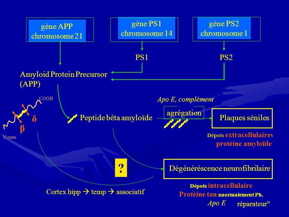 gène APP chromosome 21 gène PS1 chromosome 14 gène PS2 chromosome 1 Amyloid Protein Precursor (APP) Peptide bêta amyloïde Dégénéréscence neurofibrilai
