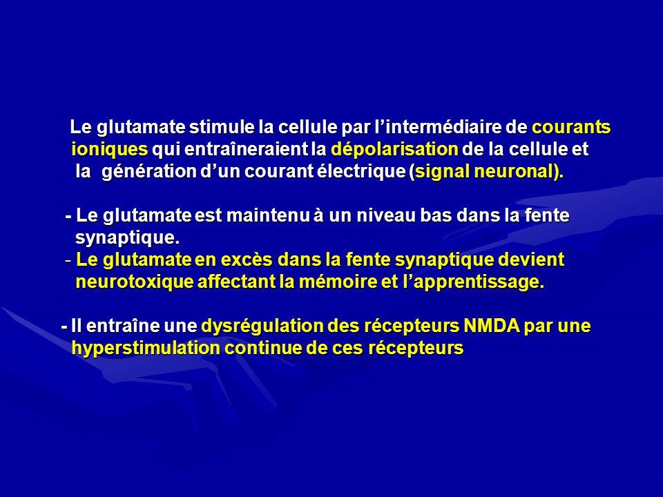 Le glutamate stimule la cellule par lintermédiaire de courants Le glutamate stimule la cellule par lintermédiaire de courants ioniques qui entraînerai