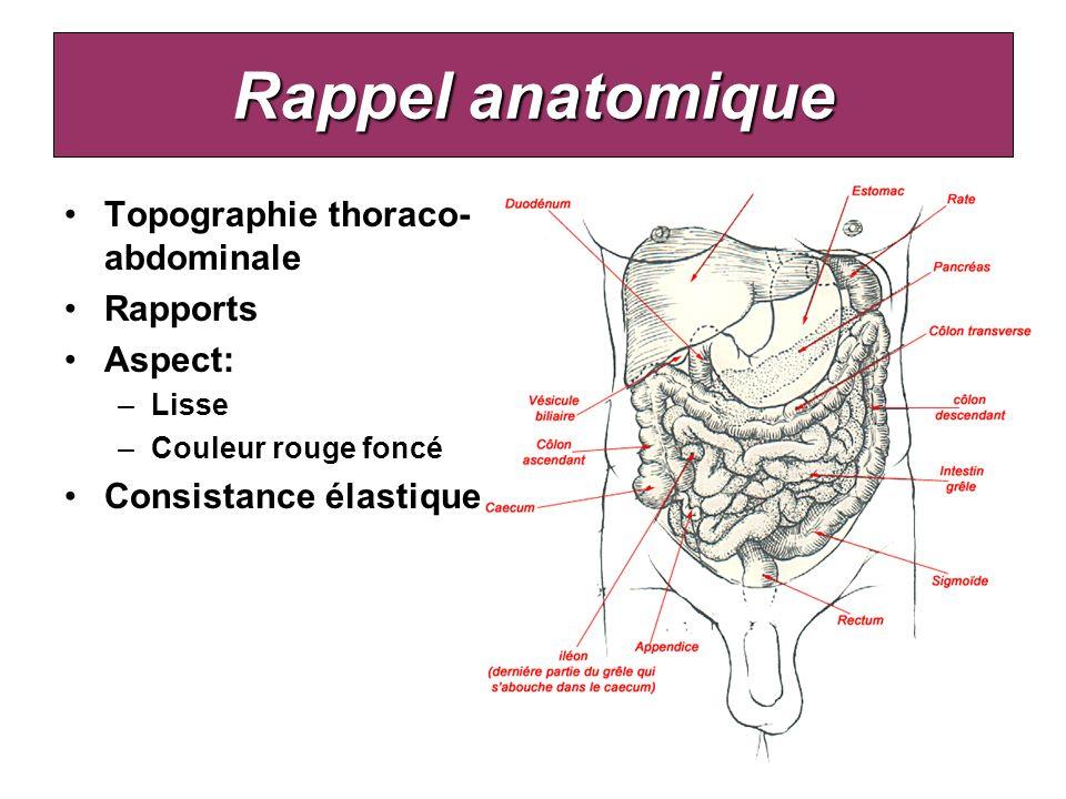 Rappel anatomique Topographie thoraco- abdominale Rapports Aspect: –Lisse –Couleur rouge foncé Consistance élastique