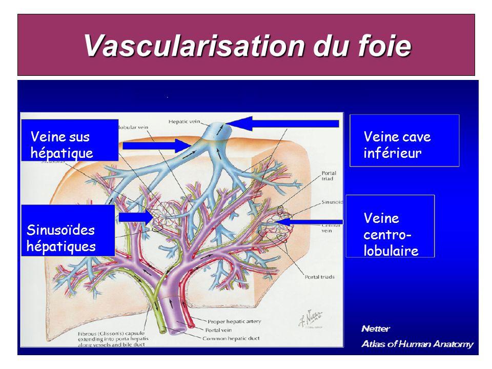 Vascularisation du foie Veine sus hépatique Sinusoïdes hépatiques Veine cave inférieur Veine centro- lobulaire