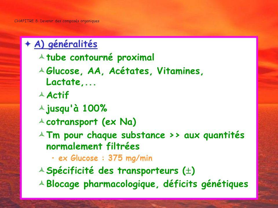 CHAPITRE 8: Devenir des composés organiques A) généralités tube contourné proximal Glucose, AA, Acétates, Vitamines, Lactate,... Actif jusqu'à 100% co