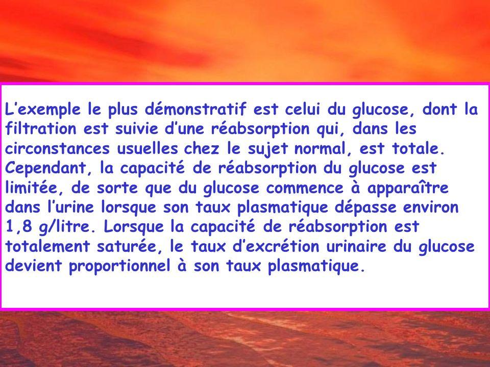 Lexemple le plus démonstratif est celui du glucose, dont la filtration est suivie dune réabsorption qui, dans les circonstances usuelles chez le sujet