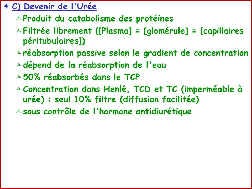 C) Devenir de l Urée Produit du catabolisme des protéines Filtrée librement ([Plasma] = [glomérule] = [capillaires péritubulaires]) réabsorption passive selon le gradient de concentration dépend de la réabsorption de l eau 50% réabsorbés dans le TCP Concentration dans Henlé, TCD et TC (imperméable à urée) : seul 10% filtre (diffusion facilitée) sous contrôle de l hormone antidiurétique