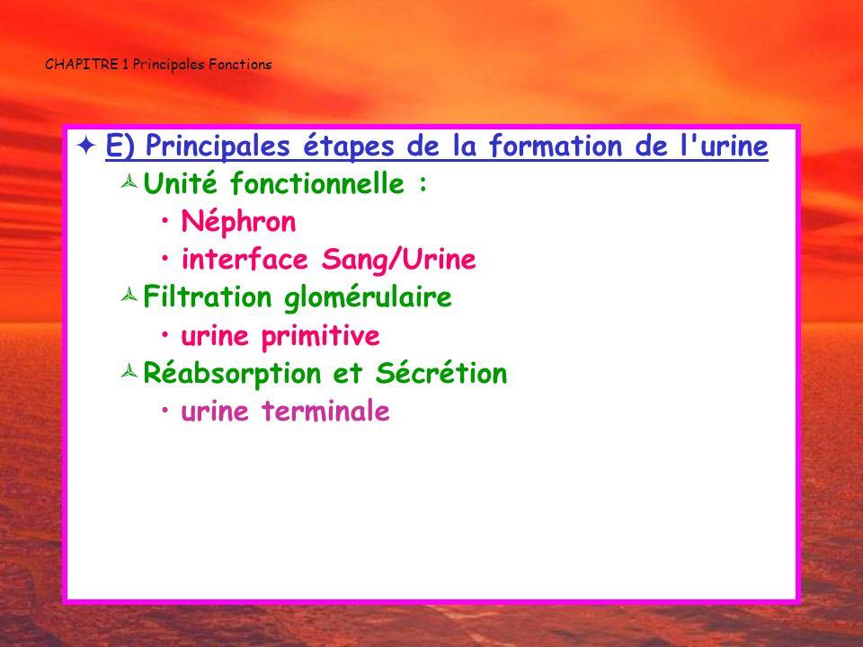 CHAPITRE 1 Principales Fonctions E) Principales étapes de la formation de l'urine Unité fonctionnelle : Néphron interface Sang/Urine Filtration glomér