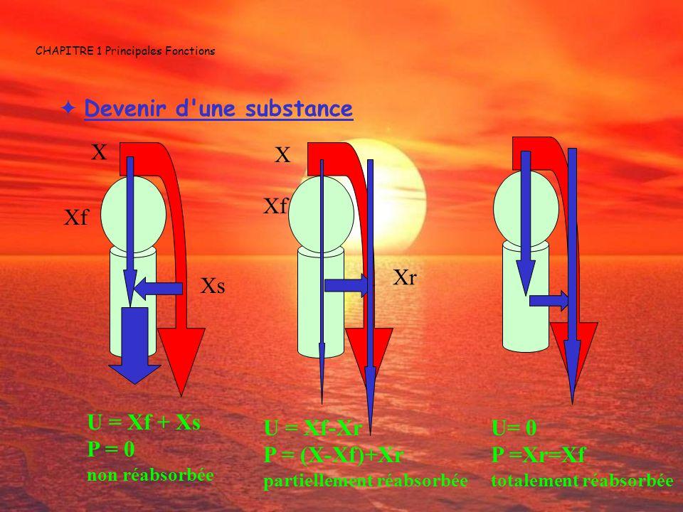CHAPITRE 1 Principales Fonctions Devenir d'une substance X Xf Xs U = Xf + Xs P = 0 non réabsorbée X Xf Xr U = Xf-Xr P = (X-Xf)+Xr partiellement réabso